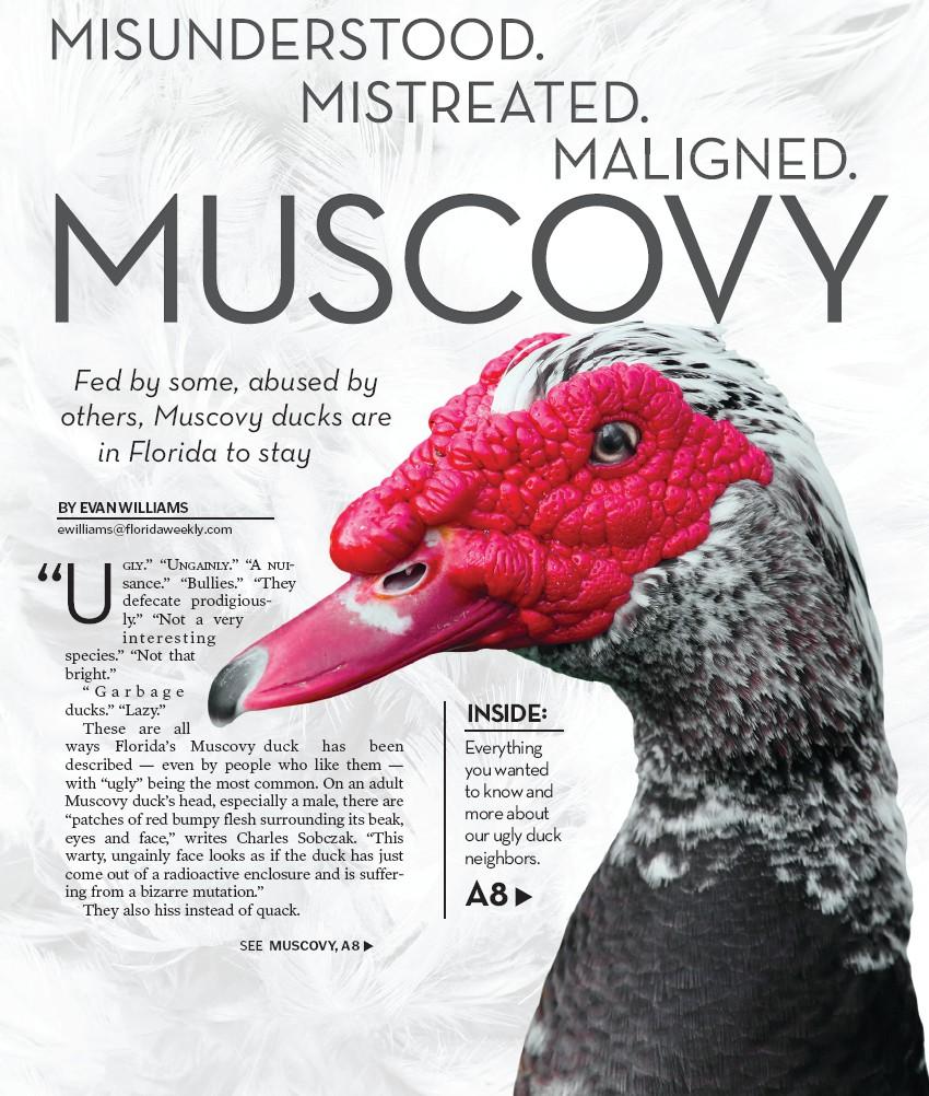 MISUNDERSTOOD  MISTREATED  MALIGNED  MUSCOVY | Palm Beach